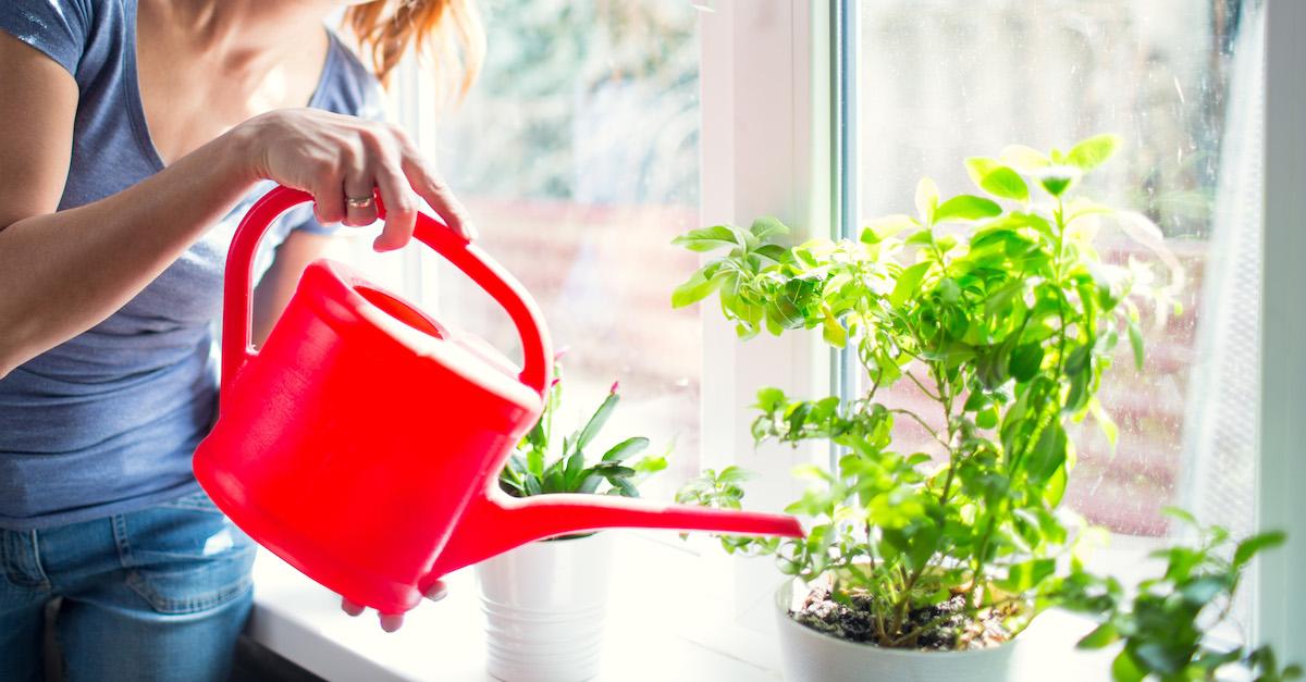 plants, home & garden, lungs, health